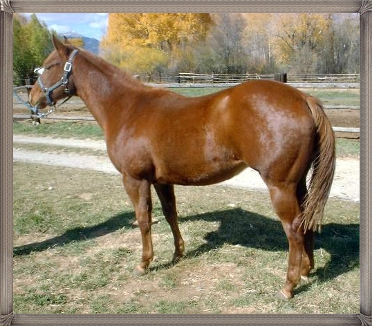 Three Year Old Filly