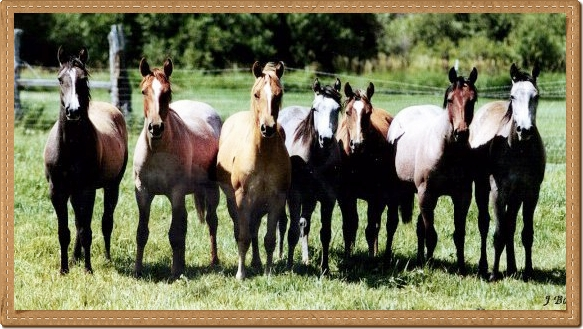 Peeples Ranch Yearlings